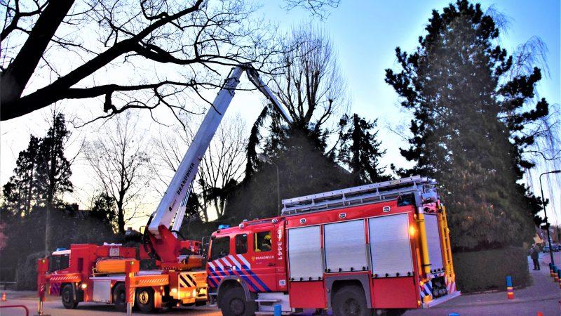 Brandweer bevrijdt spreeuw uit schoorsteen