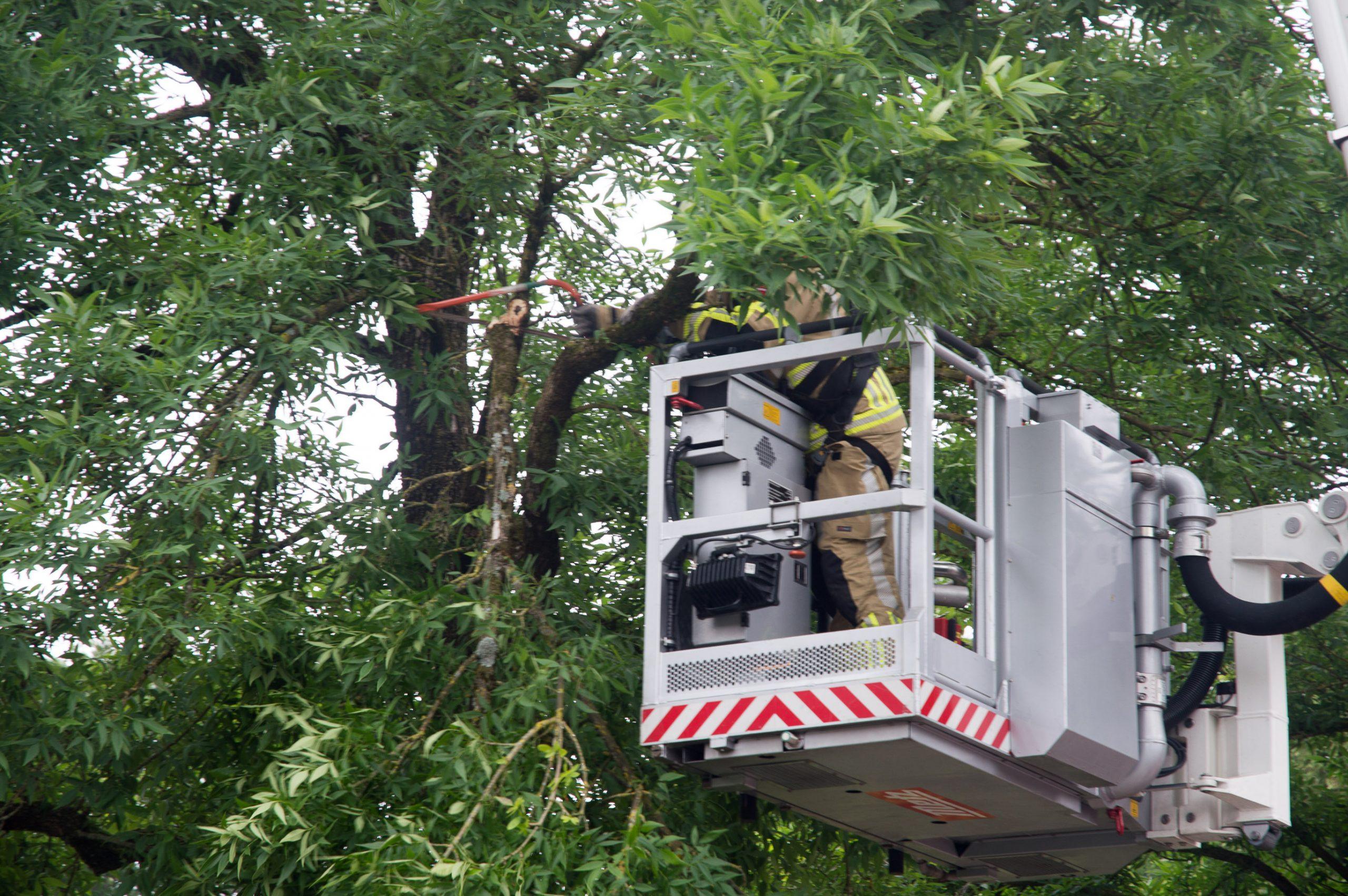 Loshangende tak uit boom gezaagd